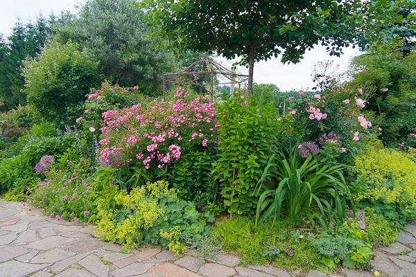 """Rose """"Mozart"""" – Rosis Garten"""